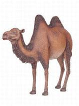 134040 Kamel Figur Lebensgroß