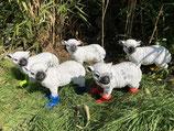 RI5002 Schaf Figur mit Stiefel (mit Farbwunsch) Deko Garten Tier Werbe Figur