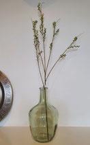 Siertak Aglaia Odorata Lour (Chinese parfumplant) 76 cm