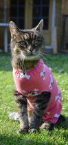 Katzenbody nach Bauch-OP, als Kratzschutz