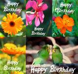 Geburtstagskartenset Sunny Greetings (5 Klappkarten mit 5 Kuverts) SHP3