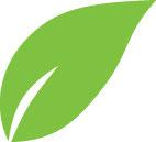 Salus Tee Bio Wechseljahre 15 Stück
