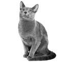 PHA Spot on Tropfen Katze 3x1,5 ml