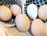 10-Eier