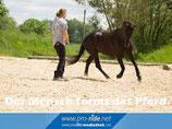 Drei-Tages-Kurs mit Thomas Günther und Silvia Wölk von Proride Horsemanship von Fr, 30. Oktober bis So, 01. November 2020