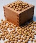 フクユタカ大豆