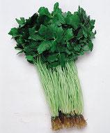 白茎三つ葉(関西系)