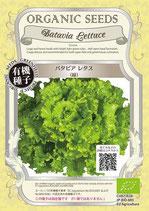 有機種子 バタビアレタス(緑)