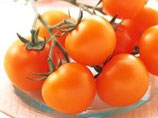 シンディーオレンジ