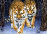 Stalking Tigers