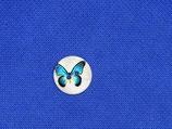 Knoop vlinder parelmoer