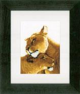 Leeuwinnen liefde