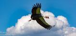 17.06.2018  -  14:00 Uhr  -  Vogelpark Walsrode