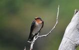 2016 05 12  -  Tierfotografie - Vogelpark Walsrode