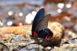 2016 05 11  -  Tierfotografie - Garten der Schmetterlinge