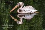 17.06.2017  -  09:00 Uhr  -  Vogelpark Walsrode