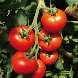 Tomate ronde ou roma