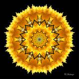 Mandala ''gelbe Blüte''