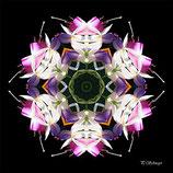 Mandala ''Fuchsien''