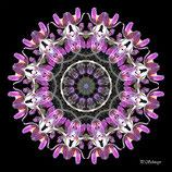 Mandala ''Kuhschelle 02''