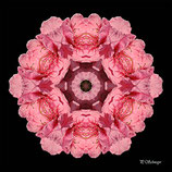 Mandala ''Rosa Blüte''