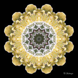 Mandala ''Blätter-Mix''