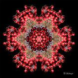 Mandala ''Beeren rot''