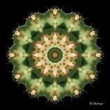 Mandala ''Kaktus''