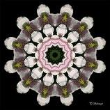 Mandala ''Clematis 02''
