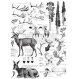 "VORBESTELLUNG! redesign Motiv Transfer ""Deer"""