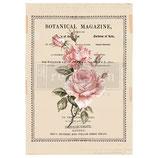 "redesign Motiv Transfer ""Beautiful Botanist"""