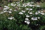 Pflanzenset: Heilpflanzen