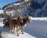 Gutschein für eine Pferdeschlittenfahrt
