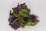 Sea Salad (Wakame, Nori, Sea Lettuce, Dillisk, Sugar Kelp)