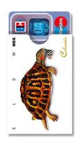 cardbox c 0183 > Schildkröte
