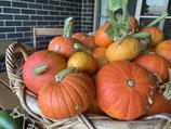 Wee Bee Little Heirloom Pumpkin -Cucurbita Pepo (15 seeds)