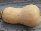 Courge Butternut (1 plant motte)