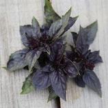 Basilic Rouge Osmin (Barquette de 6 plants)