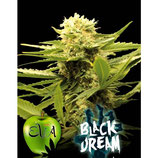 BLACK DREAM - EVA SEEDS - FEMMINIZZATA
