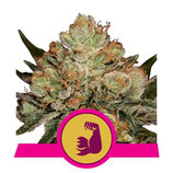 HULKBERRY * ROYAL QUEEN SEEDS  FEM
