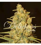 CRITICAL SENSI STAR * DELICIOUS SEEDS INDICA  FEM