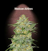 MEXICAN AIRLINES * FAST BUDS SEEDS