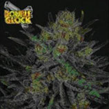DOUBLE GLOCK * RIPPER SEEDS  FEM