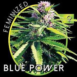 BLUE POWER* VISION SEEDS FEM