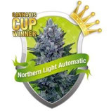 NORTHERN LIGHT AUTOMATIC * ROYAL QUEEN SEEDS AUTO