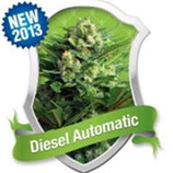 DIESEL AUTOMATIC * ROYAL QUEEN SEEDS  AUTO