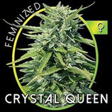 CRYSTAL QUEEN* VISION SEEDS  FEM