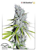 CBD SKUNK HAZE® * DUTCH PASSION  FEM