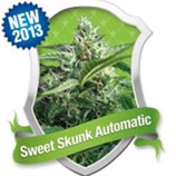 SWEET SKUNK AUTOMATIC * ROYAL QUEEN SEEDS  AUTO