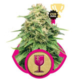 CRITICAL ROYAL QUEEN SEEDS - FEMMINIZZATA